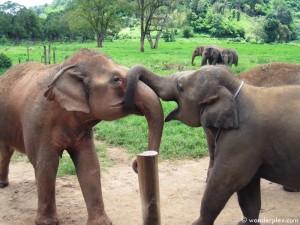 0747_elephantnature