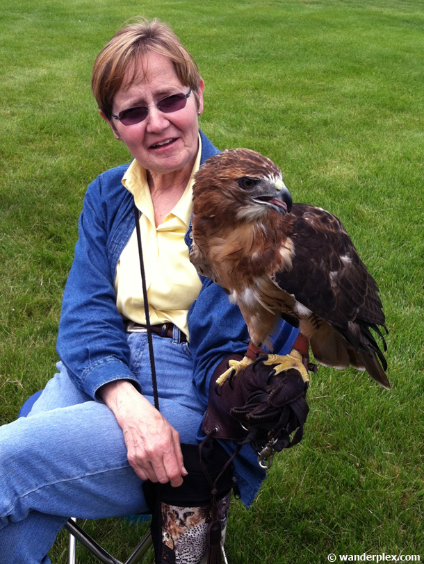 falconry-demonstration-highland-games-chicago